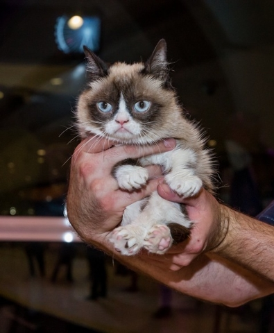 Grumpy Cat takes a ride on the High Roller on Thursday. (Courtesy)