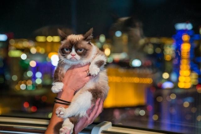 Internet sensation Grumpy Cat rode the High Roller, the world's tallest Ferris wheel, during Tuesday's book tour stop at The Linq. (Erik Kabik/Retna)