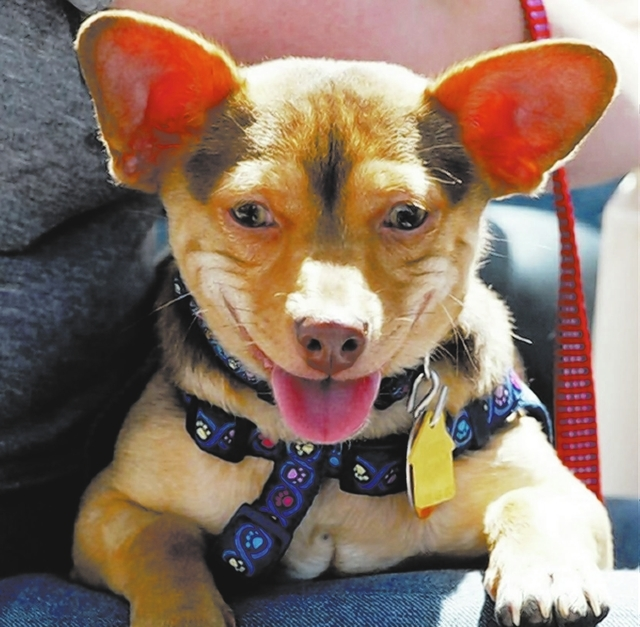 Zip, Animal Network I'm ZIP, a kelpie-Chihuahua mix who loves to play. I'll play with other dogs, a ball, a stick, a piece of paper, your toes ... you name it! I'm an 8-month-old puppy who i ...