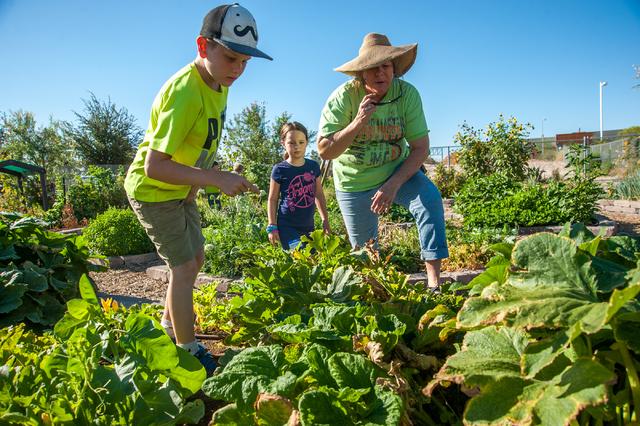 Green Thumbs Start Young In Junior Master Gardener Program U2013 Las Vegas  Review Journal