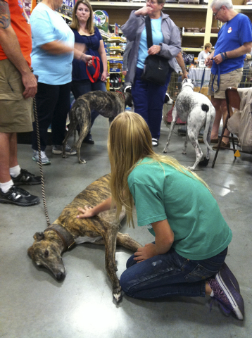 Hailey Haas, 10, interacts with a greyhound at a Centennial Hills PetSmart meet-and-greet hosted by Greyhound Pet Adoption Las Vegas, March 2014. (Special to View)
