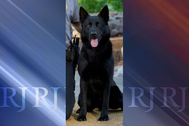 Police said Tuesday that 22-year-old Mark Salazar of Blue Mound, Texas, stabbed a police dog named Kye, then was shot to death Sunday by the dog's handler. Courtesy (Oklahoma City Police Departm ...