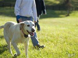 Pet-proofing your home in preparation for adopting a shelter animal