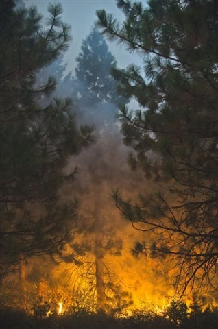 Fire burns through tall trees near Uncle Tom's Cabin in El Dorado County on Thursday, Sept. 18, 2014. The King fire has burned over 70,000 acres. The wind-whipped fire burned through 114 square mi ...