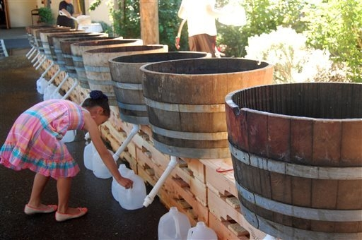A participant readies the collection jugs for a grape stomp on Saturday, Sept. 20, 2014 at the Willamette Valley Vineyards in Turner, Ore. The annual Grape Stomp draws hundreds of people to this w ...