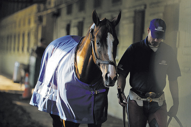 Exercise rider Willie Delgado hot walks California Chrome after a workout at Belmont Park, Tuesday, June 3, 2014, in Elmont, N.Y.  (AP Photo/Julie Jacobson)