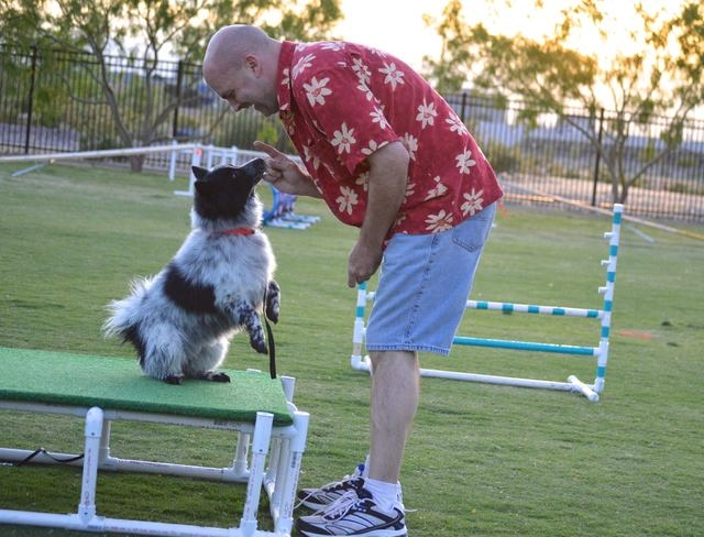 Kenneth Fazel trains his dog Oreo during an agility course hosted by Michael's Angel Paws. The organization plans one-hour dog agility classes at 10:30 a.m. Saturdays Sept. 13 through Oct. 18 at t ...