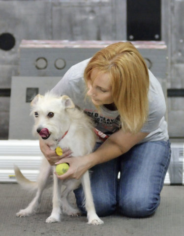 Cotton gets a hug from owner Dina Hester during Cotton's evaluation as a potential candidate for the Sincity Dogs Flyball Team, July 30. (Bill Hughes/View)