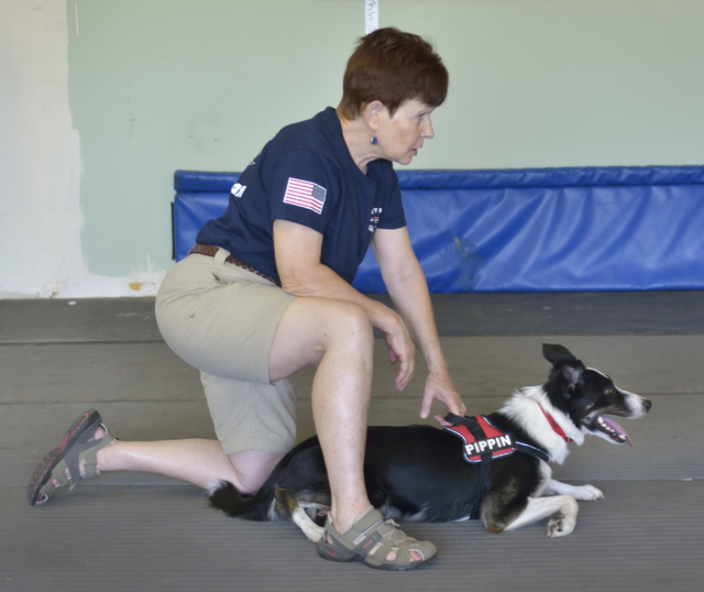 Jolen Cummings steadies her dog Pippin before the start of a run during a training session for the Sincity Dogs Flyball Team, July 30. (Bill Hughes/View)
