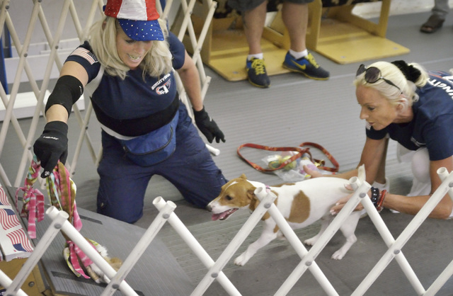 Yvette Chevalier, team captain for the Sincity Dogs Flyball Team, left, encourages Benji to get a toy as his owner, Claudia Coordes, guides him during a training session at the team's base, July 3 ...