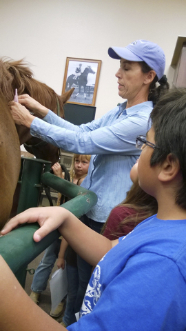 Dr. Leslie Shur, veterinarian at Desert Pines Equine Medical & Surgical Center, instructs students on how and where to vaccinate during a class at the center in Las Vegas, August 2014. (Special to ...