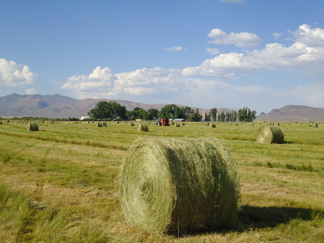 Hay bales in a field at Ninety-Six Ranch in March of 2010. (Courtesy Kris Stewart)