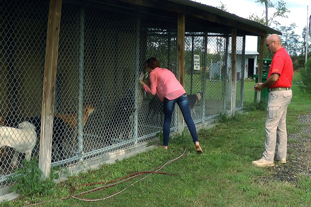 Volunteer Cortney Blankenship greets a dog while her father, police Capt. Bobby Blankenship, accompanies her at the Ozark City Animal Shelter in Ozark, Ala., on Wednesday, Oct. 1, 2014. Cortney Bl ...