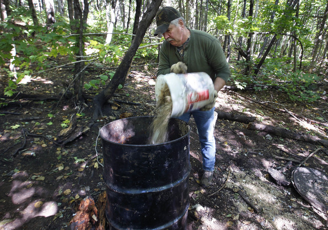 In this Friday, Sept. 19, 2014 photo, Bob Parker, owner of Stony Brook Outfitters, dumps a mix of donuts and granola into a barrel at a bear-hunting bait site near Wilton, Maine. A Maine ballot qu ...