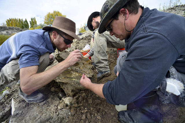 In this Oct. 16, 2014 photo provided by the Bureau of Reclamation, Idaho State University geology students Casey Dooms, left, and Jeff Castro brush and clean a mammoth skull discovered near Americ ...