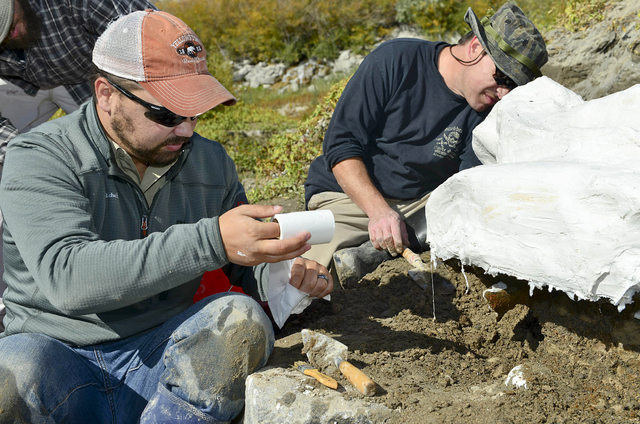 In this Oct. 16, 2014 photo provided by the Bureau of Reclamation, Idaho State University geology students Travis Helm, left, and Jeff Castro apply plaster to a mammoth skull specimen discovered n ...