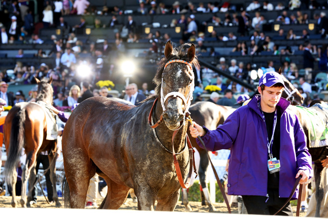 The Breeders' Cup returns to Santa Anita Park in Arcadia, Calif., on Oct. 31 and Nov. 1. (Alexandra Wyman/Invision for Breeders' Cup/AP Images)
