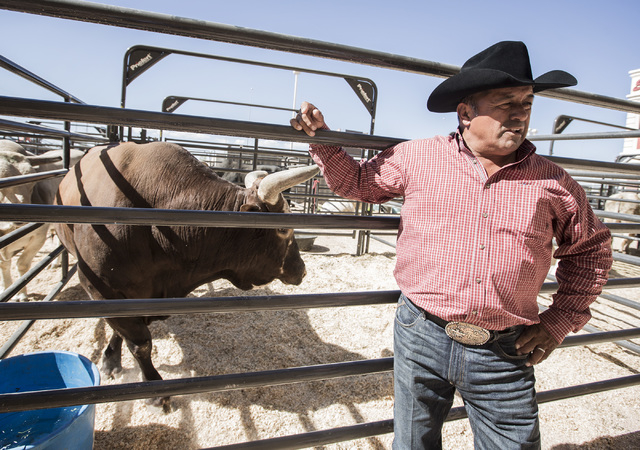 Julio Moreno with his bull Bushwacker  at South Point Arena and Equestrian Center, 9777 S. Las Vegas Boulevard o Monday, Oct. 20, 2014. The eight-year-old 1,750 pounds bull  is retiring after this ...