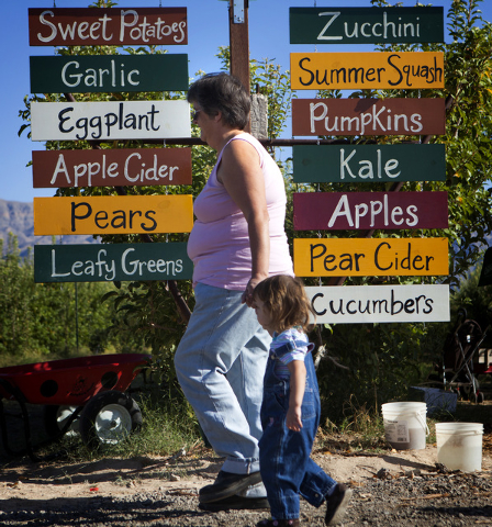 Cathy Kavall left, walks her granddaughter Victoria McCully,2 at Gilcrease Orchard, 7800 N. Tenaya Way, on Thursday, Oct. 9, 2014. The cider is made from apples at the orchard.  (Jeff Scheid/Las V ...