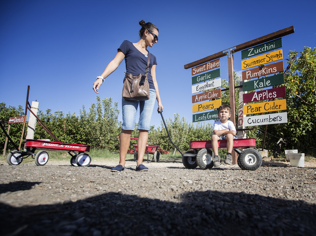 Johanna Rivera,left, and her son Luke, 4, at Gilcrease Orchard, 7800 N. Tenaya Way, on Thursday, Oct. 9, 2014. The cider is made from apples at the orchard.  (Jeff Scheid/Las Vegas Review-Journal)