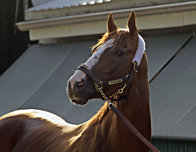 Kentucky Derby and Preakness Stakes winner California Chrome poses for the cameras outside the stakes barn at Pimlico Race Course in Baltimore, Sunday, May 18, 2014. Trainer Art Sherman says Calif ...