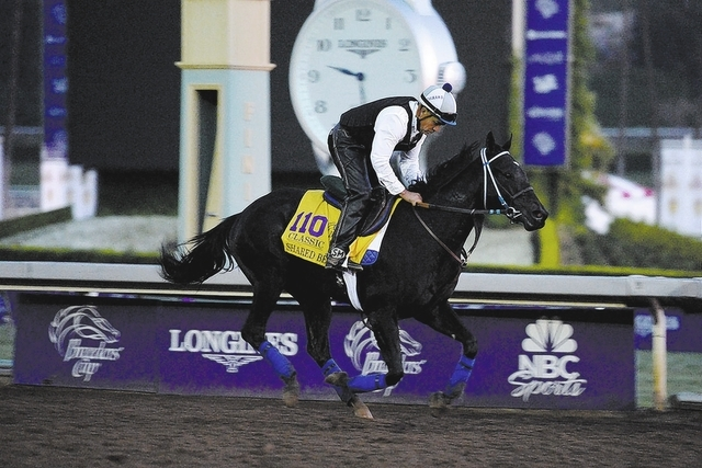Oct 30, 2014; Santa Anita, CA, USA; Shared Belief works out in the morning to prepare for the 31st Breeders Cup World Championships at Santa Anita Park. Mandatory Credit: Richard Mackson-USA TODAY ...