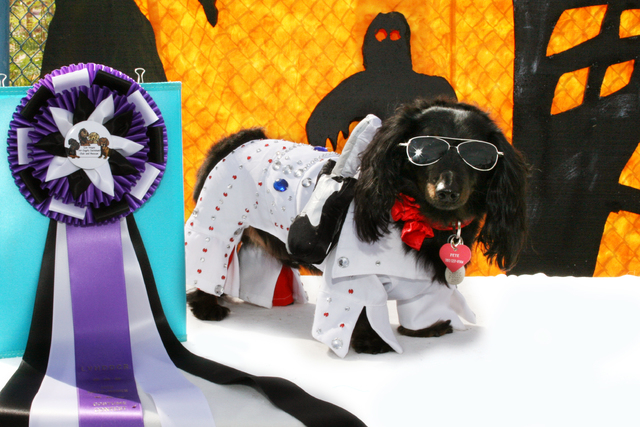 Courtesy photo  Pets of all kinds can enter the Halloween Pet Costume Contest at the Oct. 18 Family, Fur & Fun Festival at Mountain's Edge. Petey, the dachshund, is ready to go as Elvis.