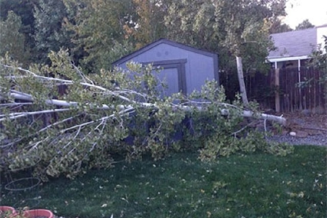 A Sierra storm packing winds gusting in excess of 85 mph on Wednesday toppled trees and downed power lines in the Reno-Tahoe area, leaving more than 1,000 homes without power for several hours. (E ...