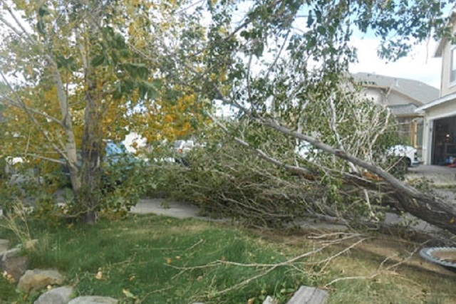 A Sierra storm packing winds gusting in excess of 85 mph on Wednesday toppled trees and downed power lines in the Reno-Tahoe area, leaving more than 1,000 homes without power for several hours. (J ...