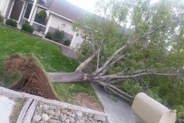 A Sierra storm packing winds gusting in excess of 85 mph on Wednesday toppled trees and downed power lines in the Reno-Tahoe area, leaving more than 1,000 homes without power for several hours. (K ...