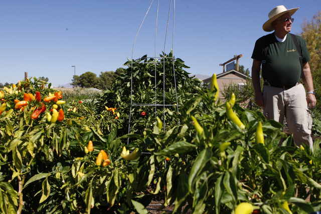 Volunteer Paul Larsen Poses For A Portrait During A Tour Of San Miguel  Community Garden,