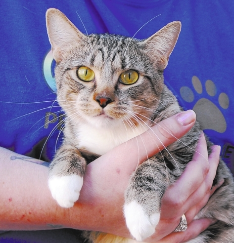 Mother Teresa, Nevada SPCA They say I am a benevolent girl because I mothered not just my own babies after our rescue, but I also gave lifesaving, nurturing care in a foster home to motherless new ...