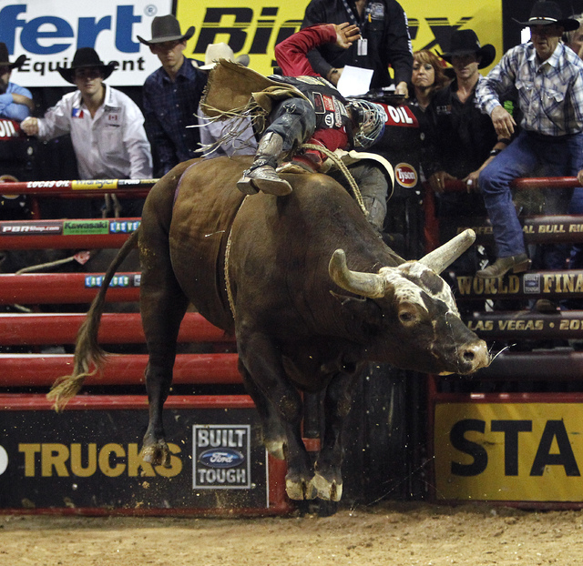Mike Lee attempts to ride Bushwacker at the 2014 Professional Bull Riders World Finals at the Thomas and Mack Arena in Las Vegas on Sunday, Oct. 26, 2014. (Justin Yurkanin/Las Vegas Review-Journal)