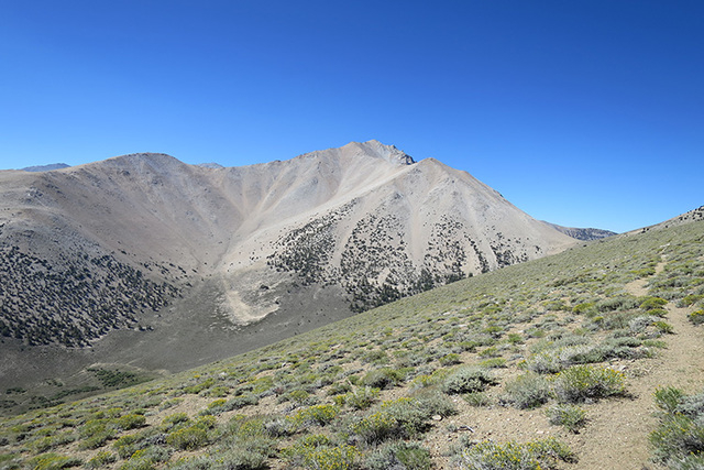 View of Boundary Peak along the Queen Mine route. (Deb Schweizer/US Forest Service)