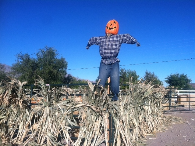A scarecrow is seen at Floyd Lamb Park at Tule Springs, 9200 Tule Springs Road in Las Vegas, Oct. 2014. Harvest Days at Tule Springs is set from 2 to 5 p.m. weekdays and 10 a.m. to 5 p.m. weekends ...