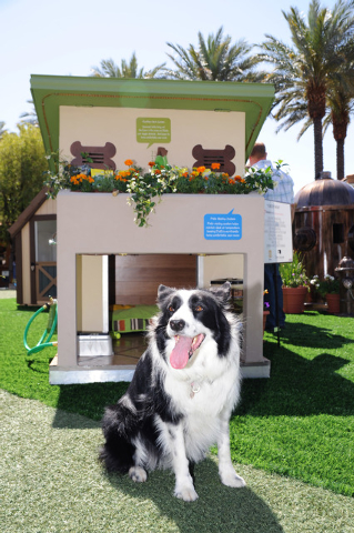 The fifth annual Project Playhouse Pet Edition is scheduled through Oct. 17 at Town Square Las Vegas, 6605 Las Vegas Blvd. South. Supporters of HomeAid Southern Nevada plan to design, construct an ...