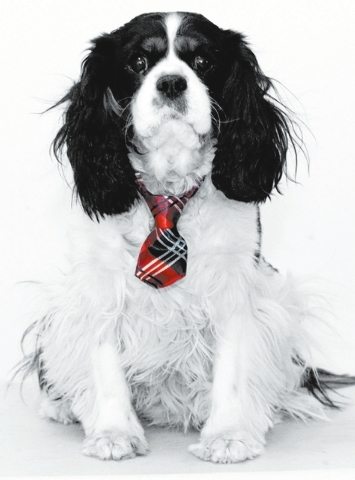 "Cele and Stan Trepner of Las Vegas said, ""This is our 5-year-old Cavalier King Charles spaniel. He has to be the mellowest dog we've ever owned. All he wants to do is love and be loved ... and ..."