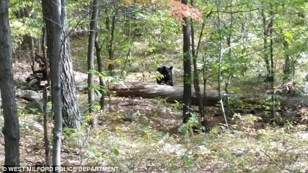 A photo taken by Darsh Patel shows a black bear moving toward him, shortly before Patel was mauled to death in a heavily wooded area in northern New Jersey in September 2014. (Reuters/West Milford ...