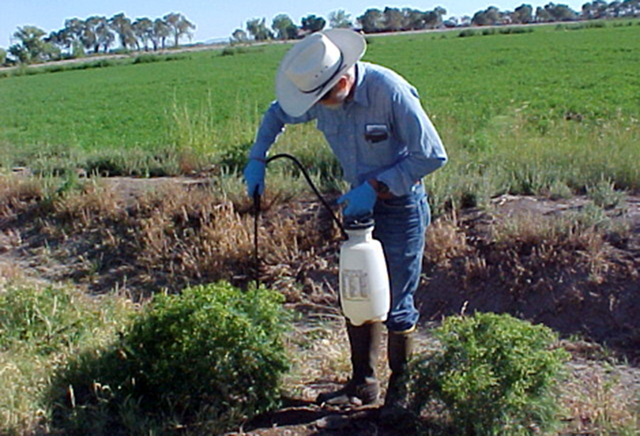 The University of Nevada Cooperative Extension is set to host a training session for applying pesticides from 7:30 a.m. to 4:30 p.m. Nov. 13 in Reno and by video conference at other Cooperative Ex ...