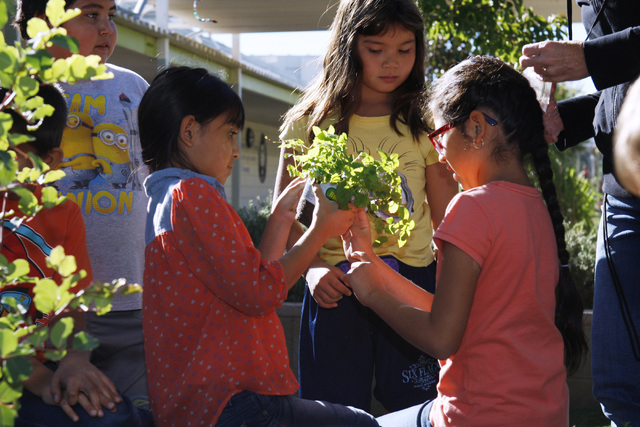 From left, Gema Mora, Sydney Ferguson and Kattie Salinas remove the packaging from a plant at Walter Bracken STEAM Academy's garden. Click photo to see more images. (Sam Morris/View)
