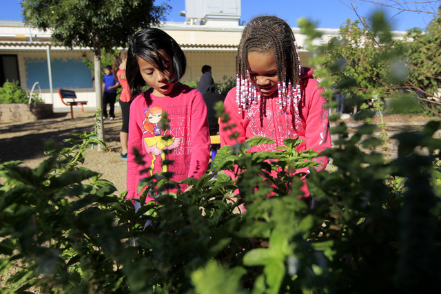 Kristal Gordano, left, and Zyniah Gary look through basil plants Oct. 28 in the garden at Walter Bracken STEAM Academy, 1200 N. 27th St. (Sam Morris/View)