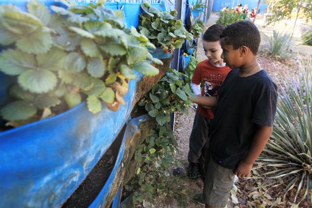 Brock Keller, left, and Negusse Solomon check for ripe strawberries at Walter Bracken STEAM Academy's garden. (Sam Morris/View)