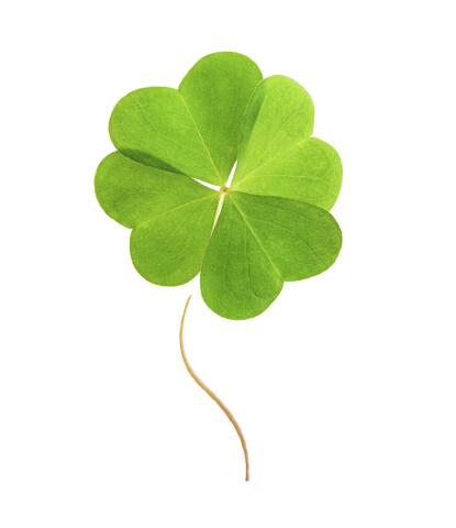 Four-leaf green clover.