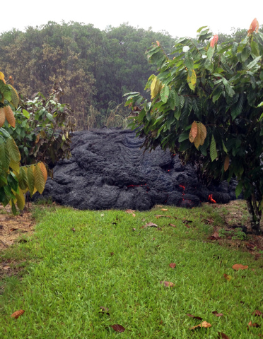 This photo taken on Nov. 1, 2014, and released from the U.S. Geological Survey, shows small breakouts from an inflating Pahoehoe lava lobe in a privately owned orchard near the town of Pahoa, Hawa ...