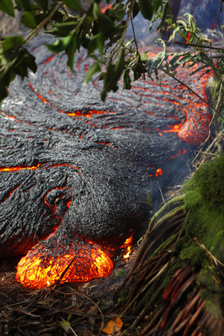 "This photo taken on Nov. 1, 2014, and released by the U.S. Geological Survey shows a ""toe"" of Pahoehoe lava oozing out of the edge of the main flow, about 328 yards  upslope of the leadi ..."