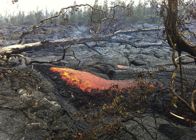 In this Nov. 13, 2014 photo provided by the U.S. Geological Survey shows a breakout of pahoehoe lava downslope of the house that burned on Monday, Nov. 10, from the lava flow from the Kilauea Volc ...