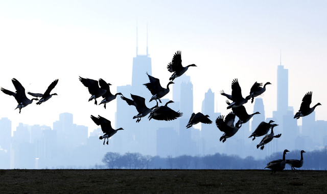 "Geese fly over Lake Michigan at Montrose Beach in Chicago, Jan. 6, 2013. The cost of six geese-a-laying spiked considerably this year, while most of the items in the carol ""The Twelve Days of Chri ..."