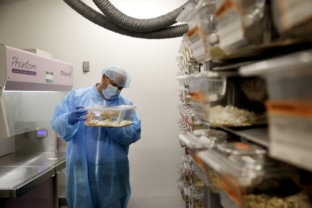 Charles Cook, manager of facilities and operations at Champions Oncology, handles a plastic cage containing mice carrying bits of a cancer patient's tumor in a lab in Baltimore, Sept. 19, 2014. (A ...
