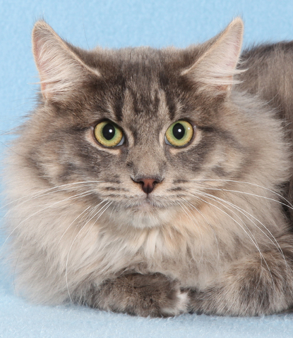 Ebba, All Fur Love Once I get to know you, I like to sleep by your legs and chase anything that moves under the covers. I enjoy playing. My favorite toy is the laser light, and I play for hours on ...