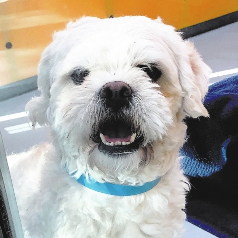 Banjo, The Animal Foundation My name is Banjo (ID No. A815562), and I'm a 4-year-old male miniature poodle waiting to meet the one. People tell me I'm adorable, and my bouncy personality is on ...